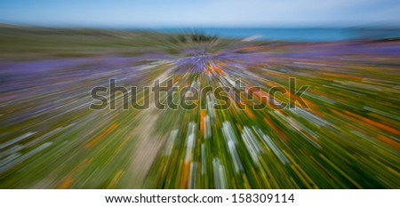 abstract image of flowers using zoom blur in camera - stock photo