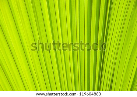 abstract image of fresh Green Palm leaves in nature