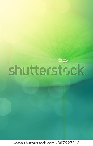 Abstract image with water drop on leaf, Beautiful nature background with water drop on lotus leaf