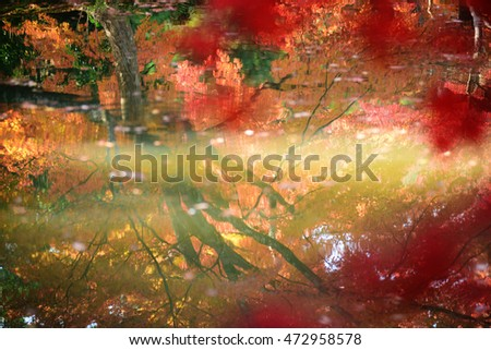 abstract landscape, japanese maple tree leaf in autumn season over water pond