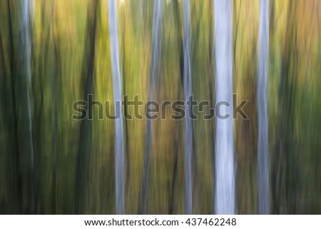 Abstract landscape of evening autumn forest with birch trees.  Image produced by camera motion. - stock photo