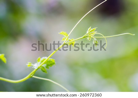 Abstract leaf tendril spiral close-up - stock photo