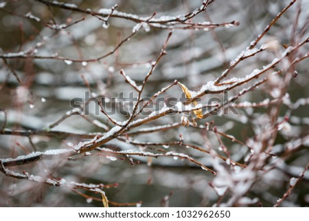 Abstract linden tree twig under snow in winter time