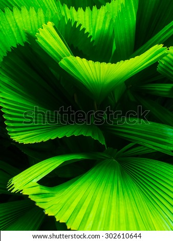 Abstract line texture of green palm leaf. - stock photo
