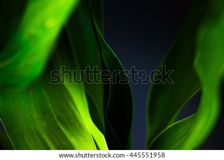 abstract low key blur green leaf background  - stock photo