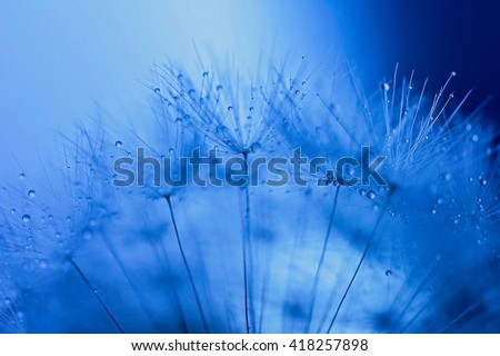 Abstract macro cyan photo of dandelion seeds with water drops. - stock photo