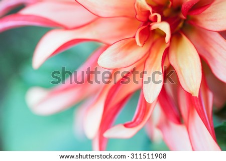 Abstract macro photo of a flower with shallow depth of field. Natural background. - stock photo