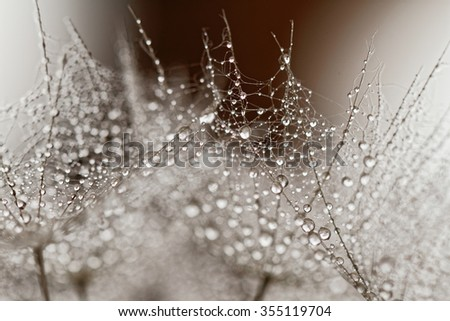 Abstract macro photo of dandelion seeds with water drops - stock photo
