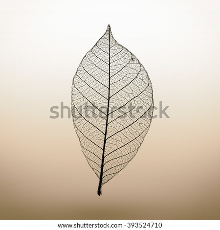 Abstract macro photo of plant's leaf. Minimalism.
