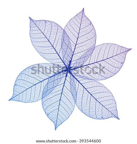 Abstract macro photo of plant's leaves isolated over white background - stock photo