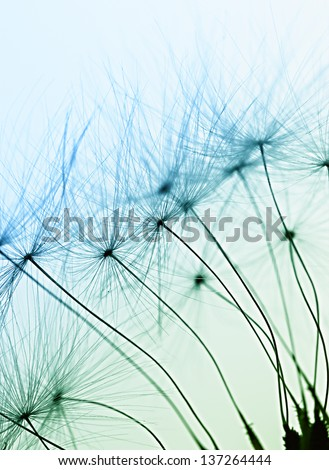 Abstract macro photo of plant seeds with water drops.