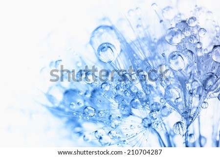 Abstract macro photo of plant seeds with water drops