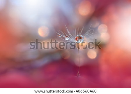 Abstract macro photo of plant seeds with water drops. Dandelion seed.Artistic Background for desktop. - stock photo