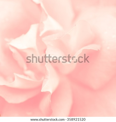 Abstract macro shot of beautiful pink rose flower. Floral background with soft selective focut - stock photo