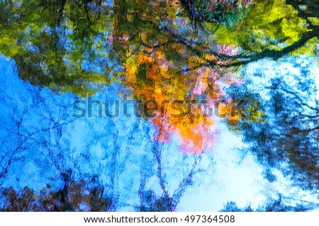 Abstract maple reflection in water