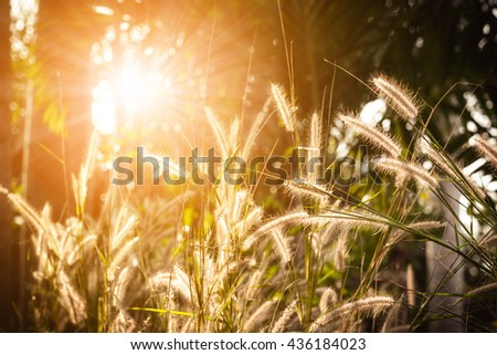 Abstract meadow background with grass in the meadow and sunset. Selective focus