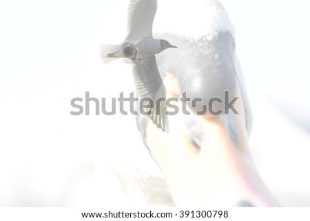 Abstract montage of a mute swan and a seagull - stock photo