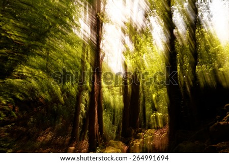 Abstract motion blur of trees in a forest  - stock photo