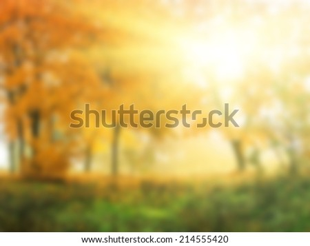 abstract natural background,autumn in sunny forest - stock photo