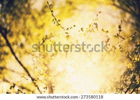 Abstract natural background, forest trees. nature green wood sunlight backgrounds.Green birch leaves, bright sun, spring nature background, vintage style - stock photo