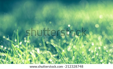 Abstract natural background. Fresh spring grass with drops on natural defocused light green background. Retro filtered.  Cross process, - stock photo