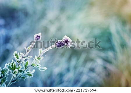 abstract natural background from frozen plant covered with hoarfrost or rime - stock photo