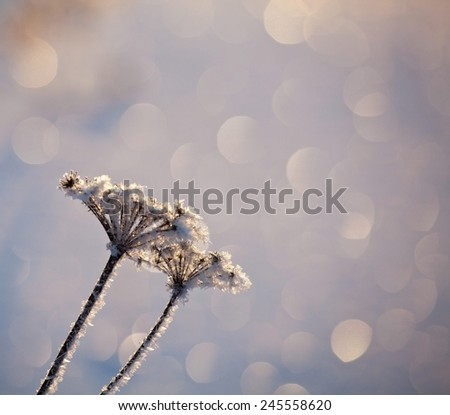 abstract natural background from frozen plant covered with hoarfrost or rime with beautiful bokeh background - stock photo