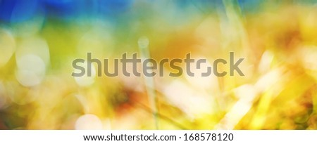 Abstract natural background of nature - stock photo