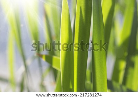 abstract natural background with a fly and leaves of cane