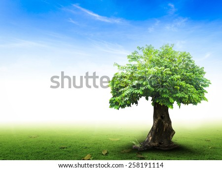 Abstract natural backgrounds with big tree and green grass and beauty blue sky. - stock photo