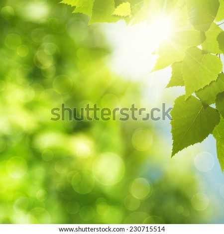 Abstract natural backgrounds with green foliage and sun beam - stock photo