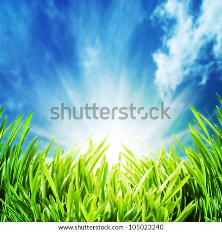 Abstract natural backgrounds with green grass unfer the blue skies - stock photo