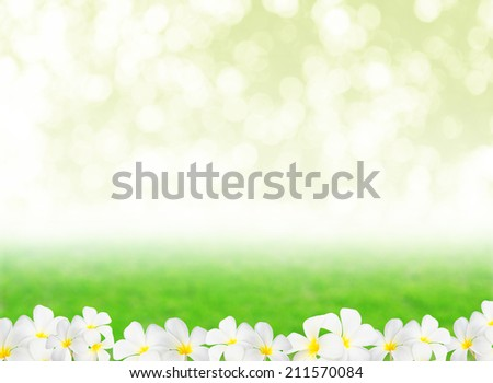 Abstract natural backgrounds with Plumeria flower and beauty bokeh - stock photo