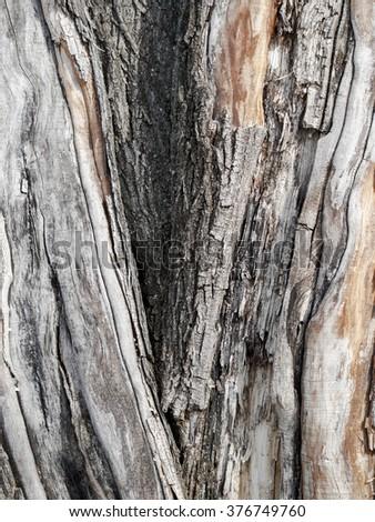 Abstract natural bark of tree and peeling wood bark - stock photo
