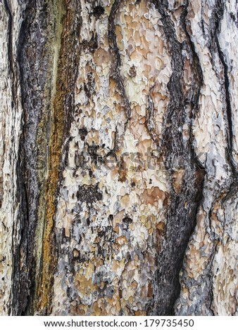 Abstract natural camouflage of tree and peeling wood bark - stock photo