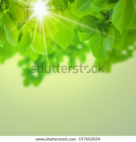abstract natural in warm atmosphere - stock photo