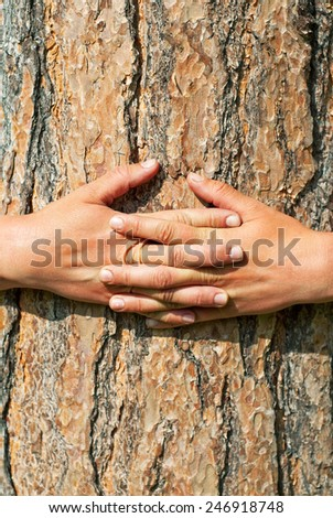 Abstract Nature. Arms wrapped around a tree - stock photo