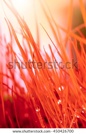 Abstract nature background. Autumn red grass with water drops. - stock photo