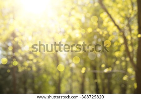Abstract nature background,Blur trees and sunlight. - stock photo