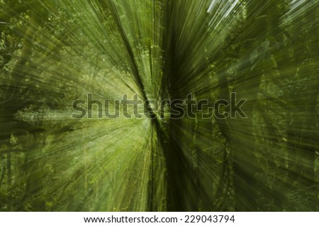 Abstract nature background in deep rainforest. Blur effect ,Doi  - stock photo