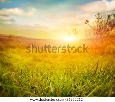 Abstract nature background. Spring grass. Blur background with spring or summer landscape. Summer meadow - stock photo