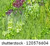 Abstract Nature Background, wall garden - stock photo