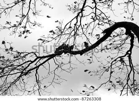 Abstract nature background with birds and trees. Monochrome photo of Dove on the branch of old tree in the autumnal park - stock photo