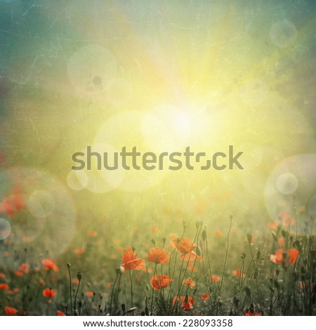 abstract nature background with poppies - stock photo