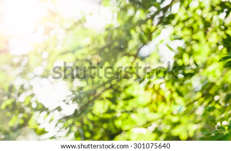 Abstract nature blured background with beautiful bokeh. Defocused green background with sunshine and leaves. Blur image of a forest. - stock photo
