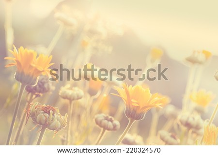 Abstract nature blurred background - orange flower on meadow with sun rays, toned photo - stock photo