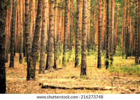 Abstract nature eco pine forest background: vertical pattern consisting of trunks.