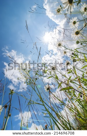 Abstract nature floral background, Amazing sunny day at summer meadow with wildflowers under blue sky - stock photo