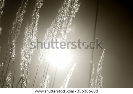 abstract nature, neutral background, sunlight