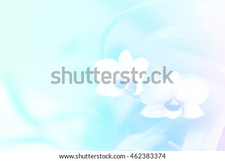abstract nature orchid flower with pastel color filter , sweet tone background , and copyspace using for wedding media presentation or desktop wallpaper